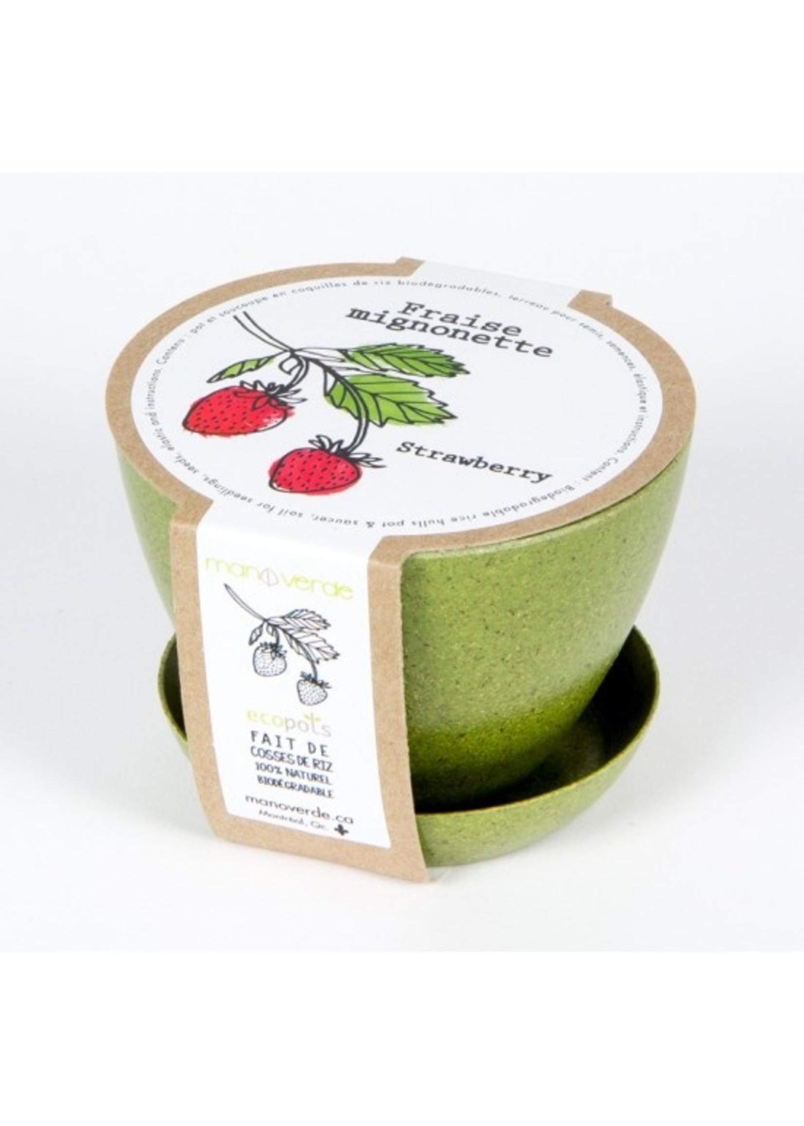 Mano Verde Mini pot -Fraise mignonette
