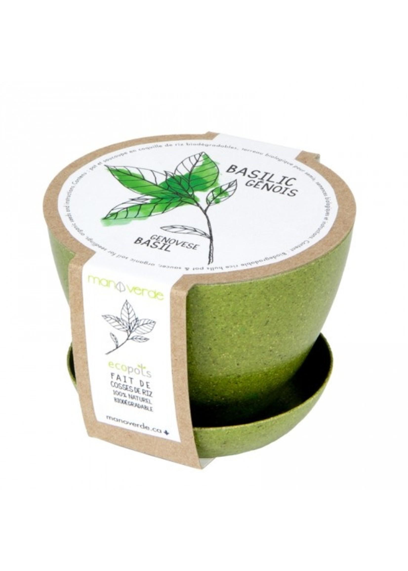 Mano Verde Mini pot -Basilic génois