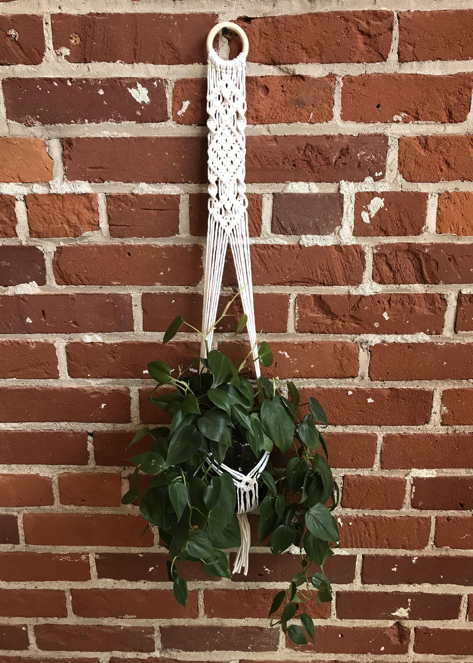 DIY Macrame Plant Hanger Kit - The Evelyn