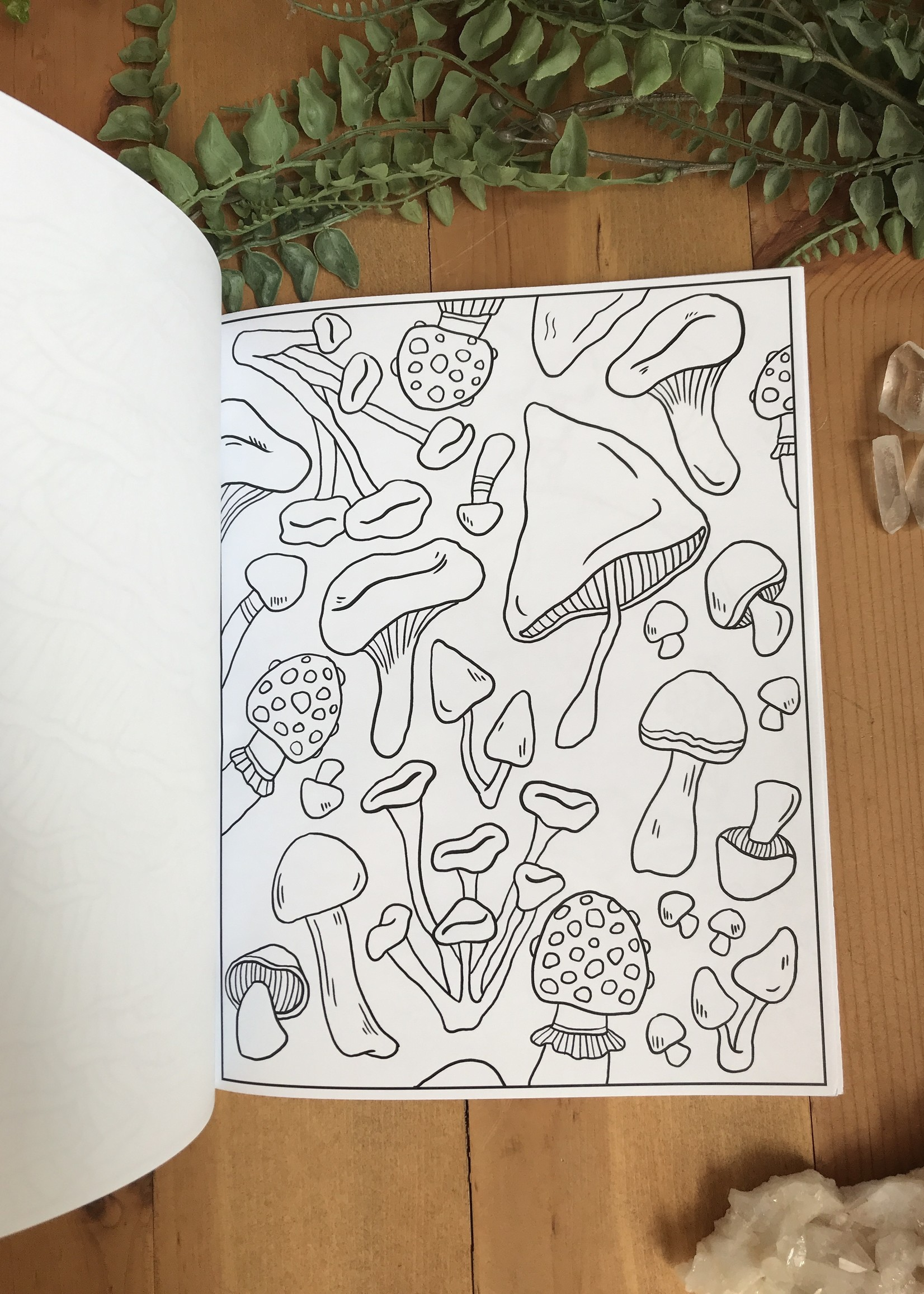 Mushroom Coloring Book