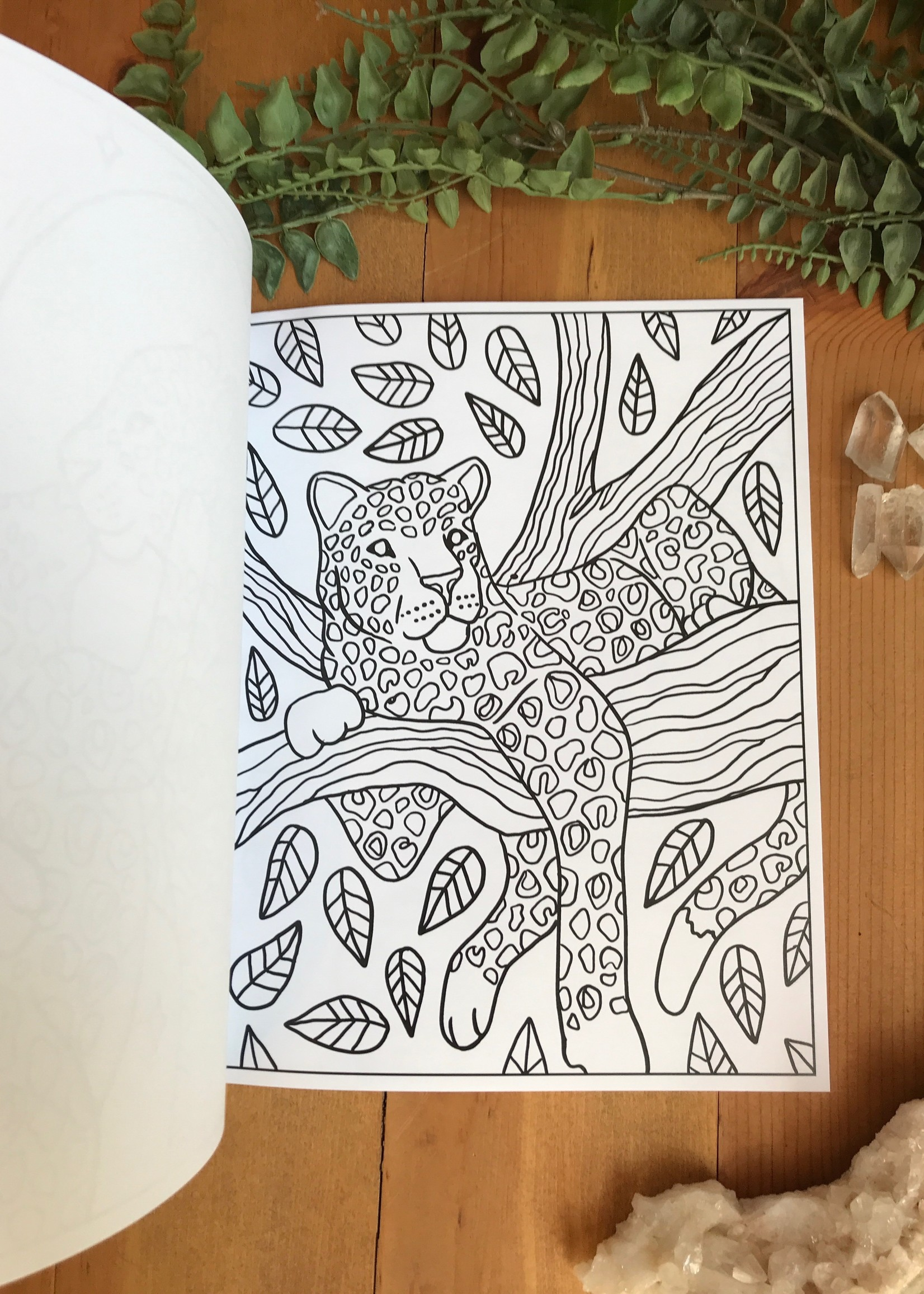 Leopards Coloring Book