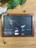 Bald Eagle w/Kingbird - Jeff Bucklew
