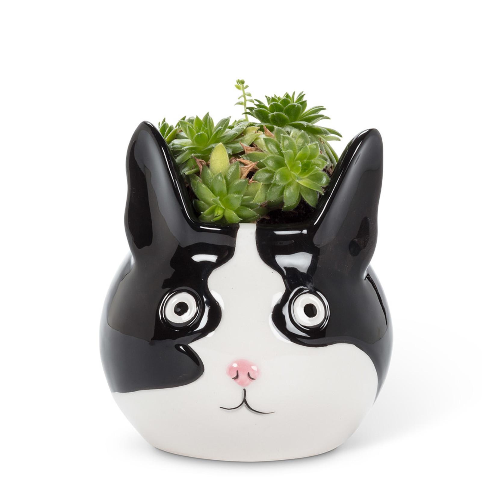 Abbott Cat Planter