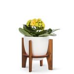 Abbott White Pot with Wooden Stand