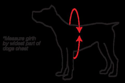 Level Six Dog Measurement