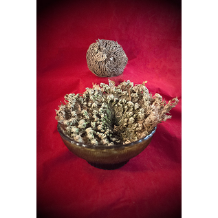 Hex Loose Rose of Jericho