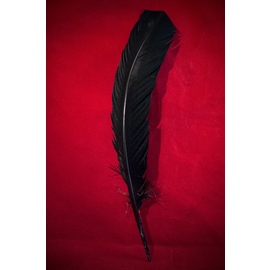 Black Feather Quill Pen