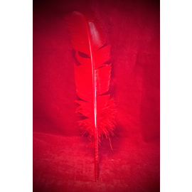 Red Feather Quill Pen