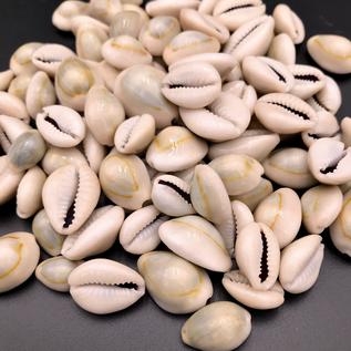 Azure Green Loose Cowrie Shells