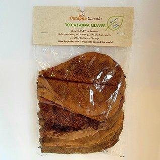 Almond Leaves - Medium