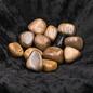 Stone Spinner Petrified Wood