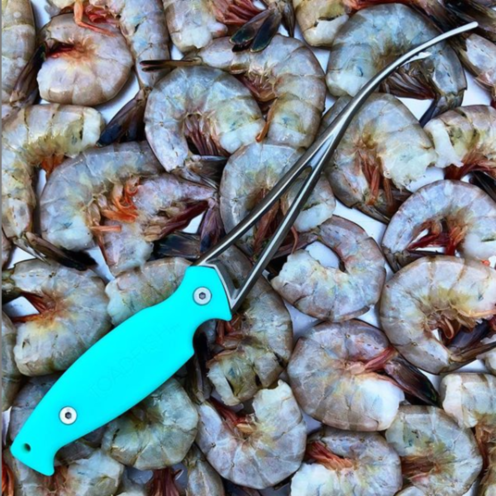 Sunjammers Toadfish Frogmore Shrimp Cleaner