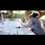 Wine Hidden Gems Spring Italian Wine Collection 12-bottle-case