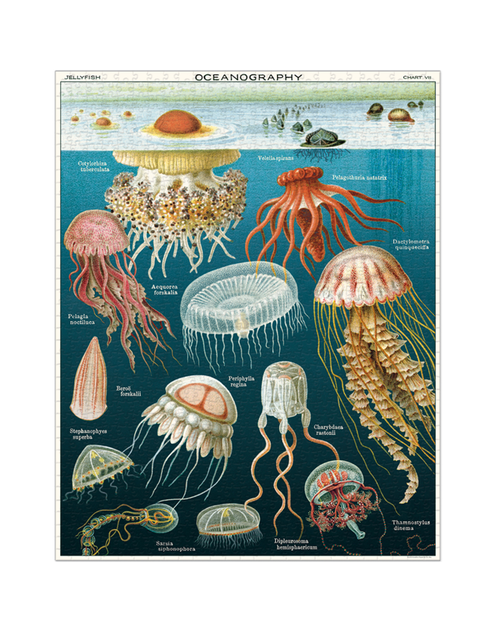 Vintage Inspired Puzzle - Jellyfish