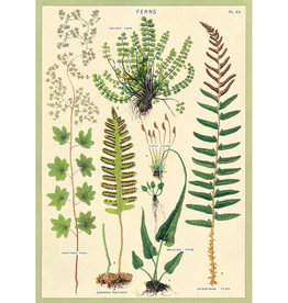 New Poster - Ferns