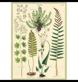 Poster - Ferns