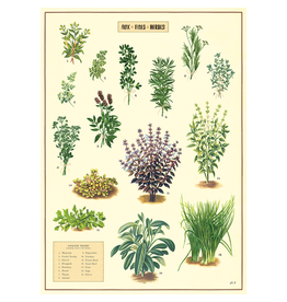 Poster - Kitchen Herbs