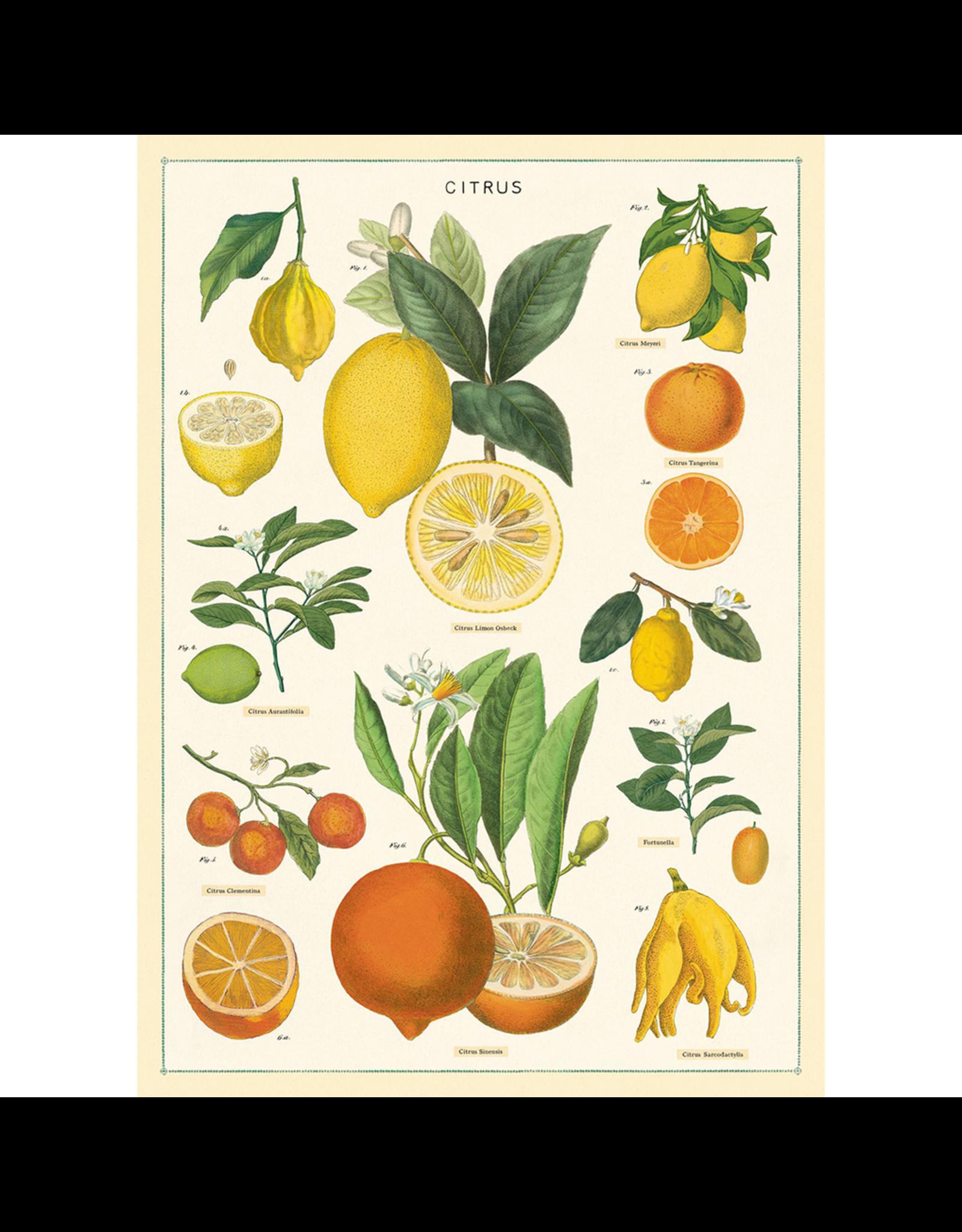 Poster - Citrus