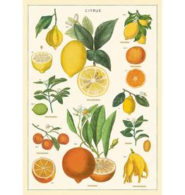 New Poster - Citrus