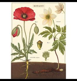 Poster - Botany