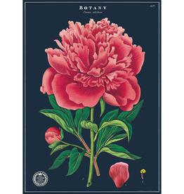 New Poster - Botany Study