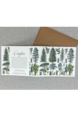 Card - Conifer Forest