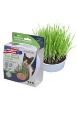 Van Ness Oat Garden Grass Kit