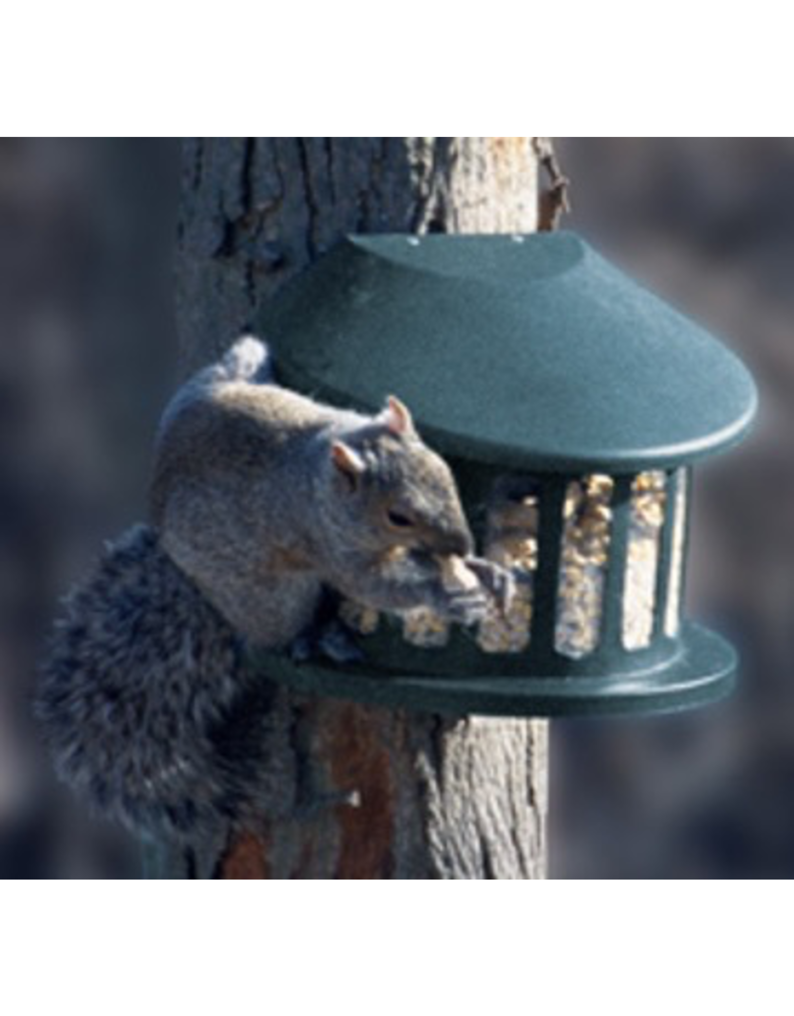 Woodlink PW75590 Metal Squirrel Feeder