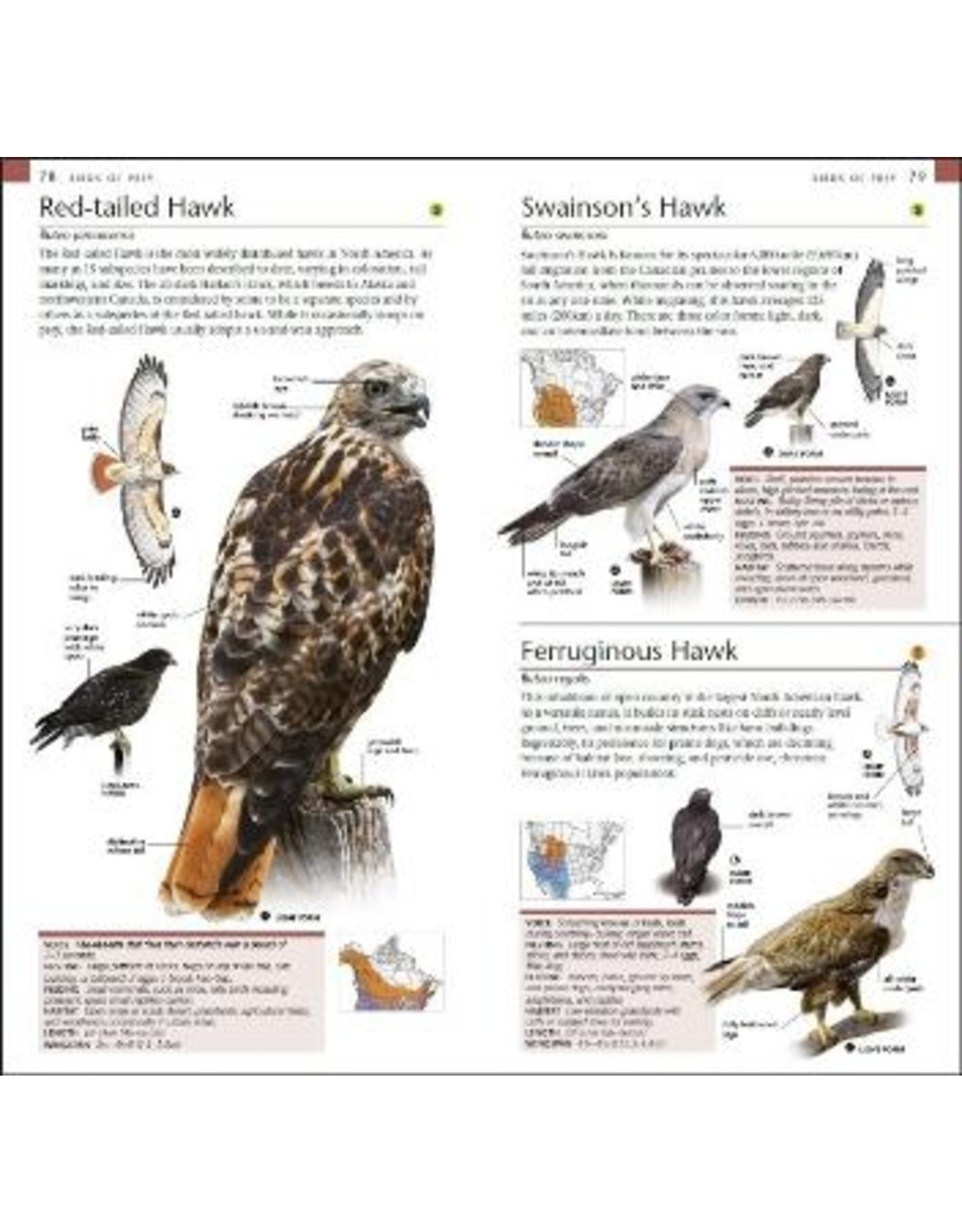 DK BTLBPOC DK Pocket Birds of Canada