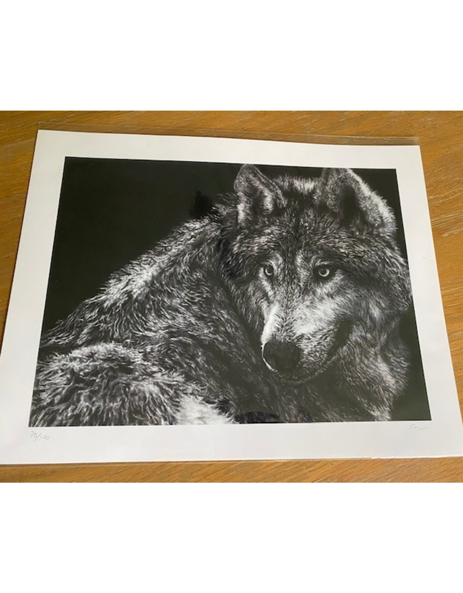 "Stevie Devine SDWOLF 10"" X 13"" Wolf Print by Stevie Devine"