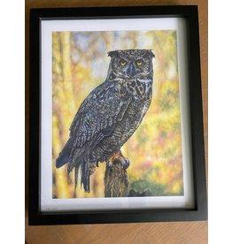 Stevie Devine SDFOWL Framed Owl Print by Stevie Devine