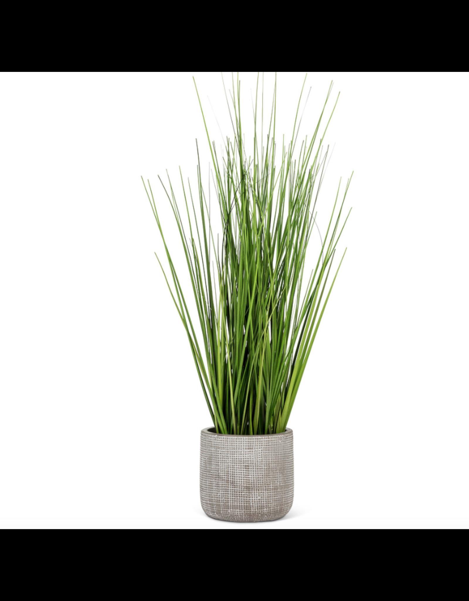 "Abbott Tall Grass in Grey Pot 19"""