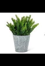 Abbott Fern Leaf Plant Pot