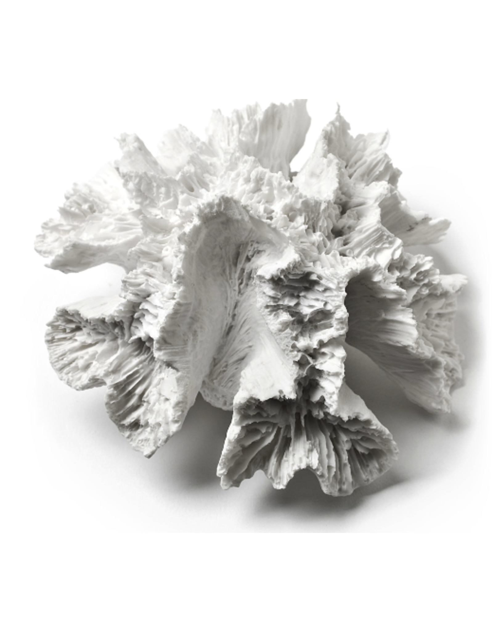 """Abbott Flower Coral White 5"""""""