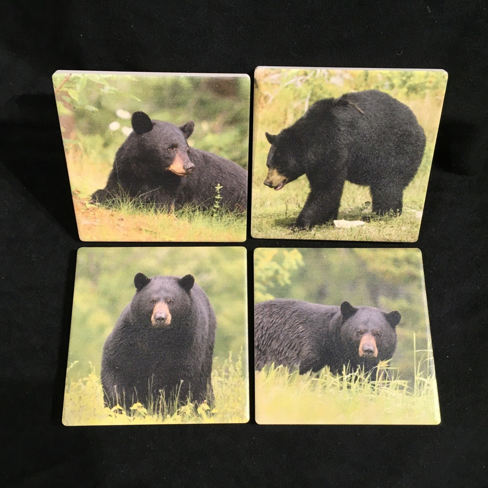 Black Bear Coasters (Set of 4)