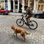 Dog Leash Bike Clip