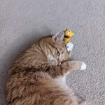 Cat Toys & Scratchers