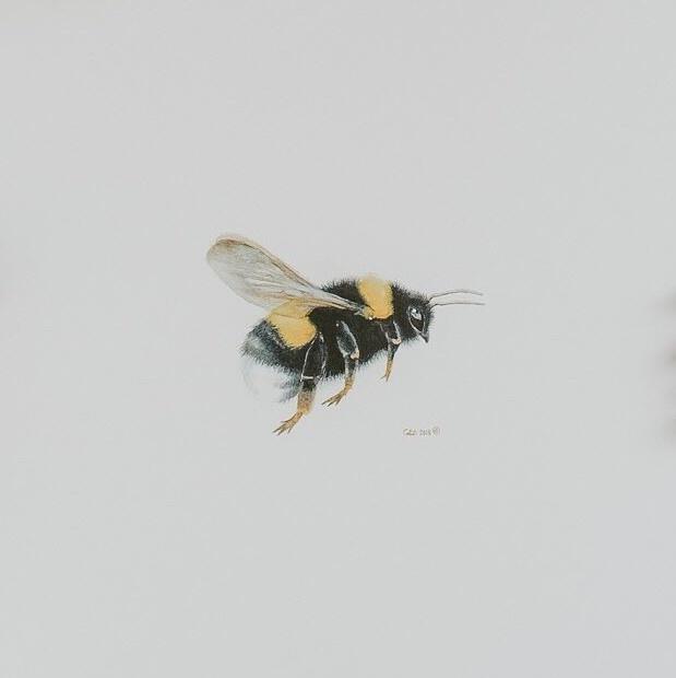Watercolour Bumble Bee (5x5 Card/Frameable Art Print)-1