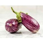 Tourne-Sol Listada di Gandia Eggplant