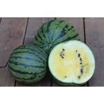 Tourne-Sol Early Moonbeam Watermelon