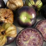Tourne-Sol Purple Tomatillo