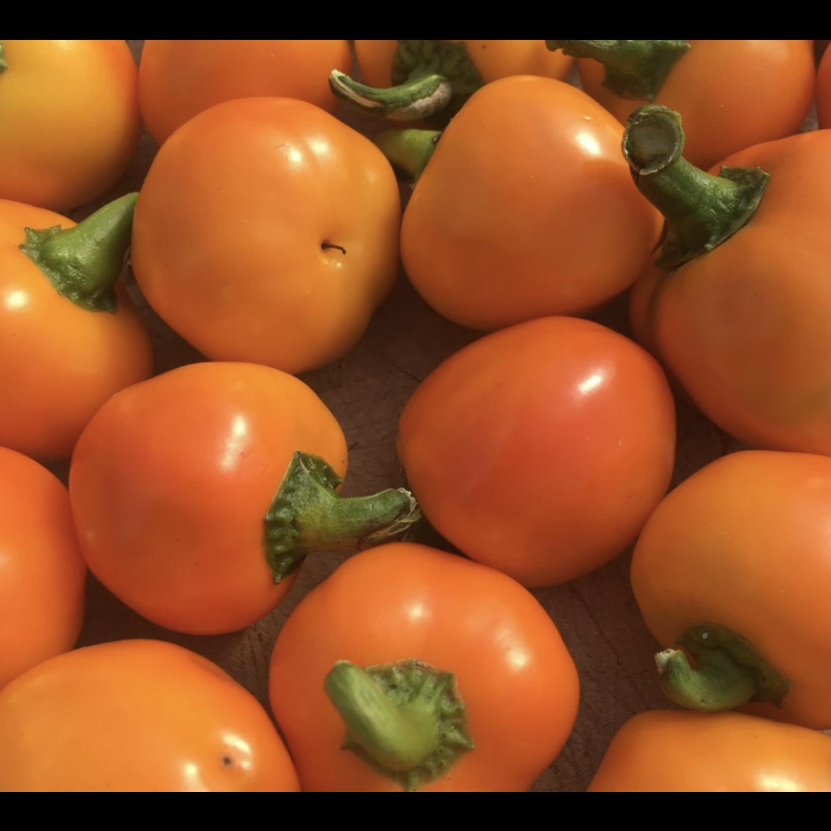 Tourne-Sol Carrot Bomb Hot Pepper