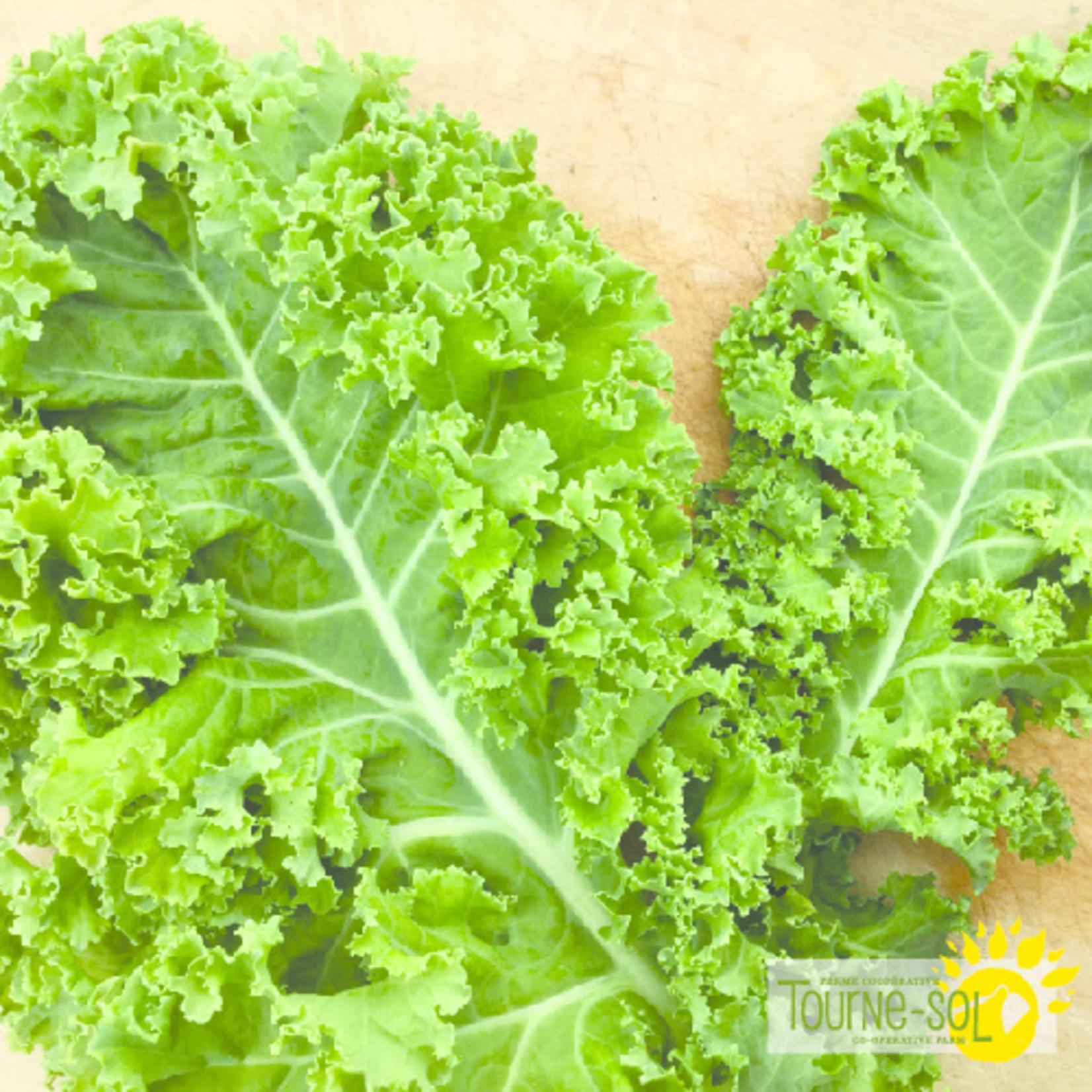 Tourne-Sol Kale Vates