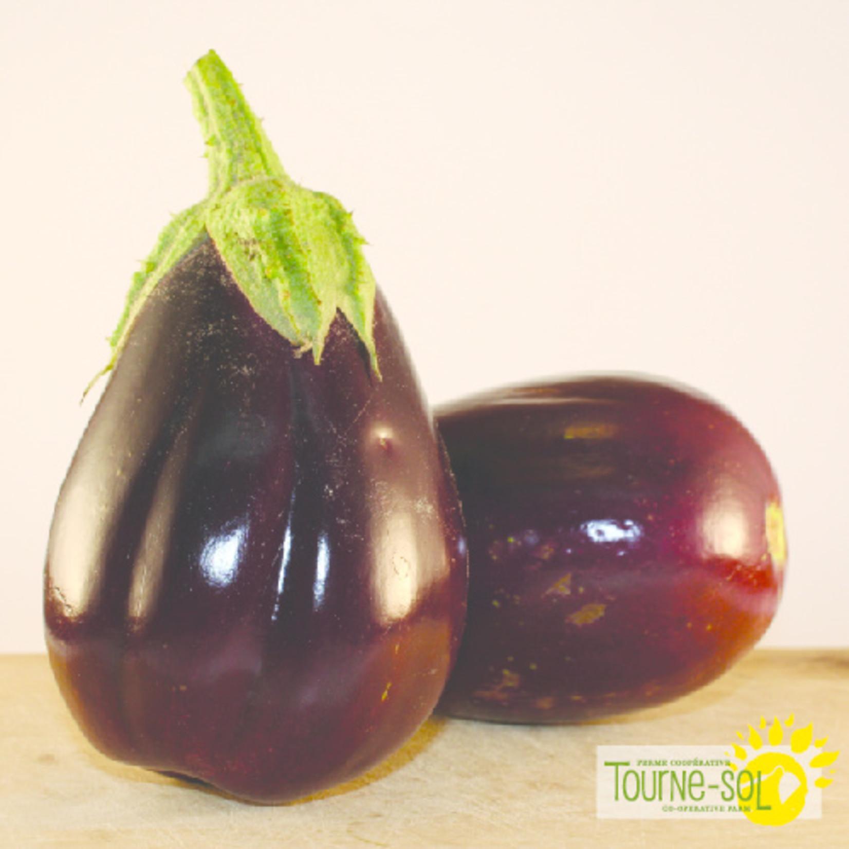 Tourne-Sol Aubergine Black Beauty