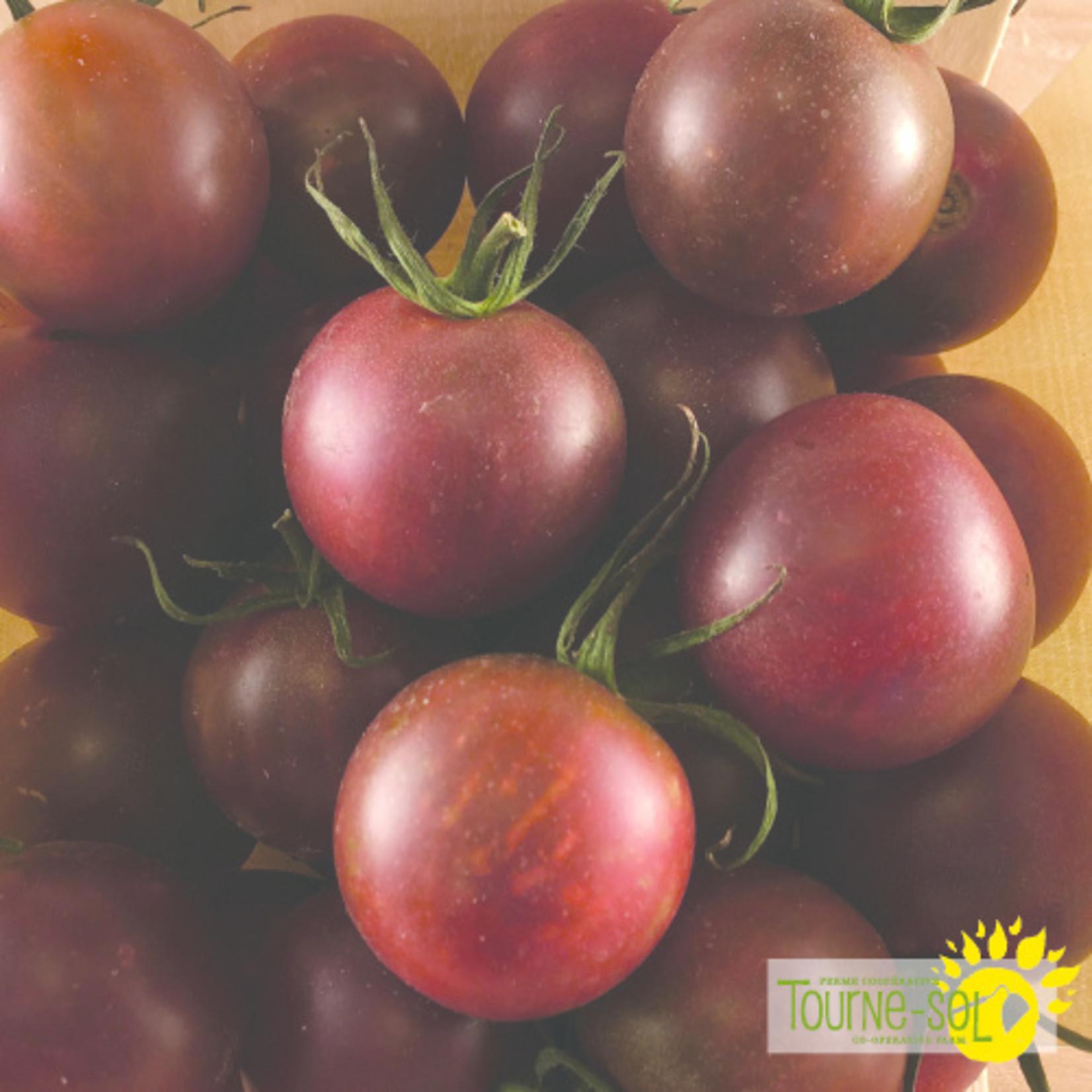 Tourne-Sol Black cherry tomato
