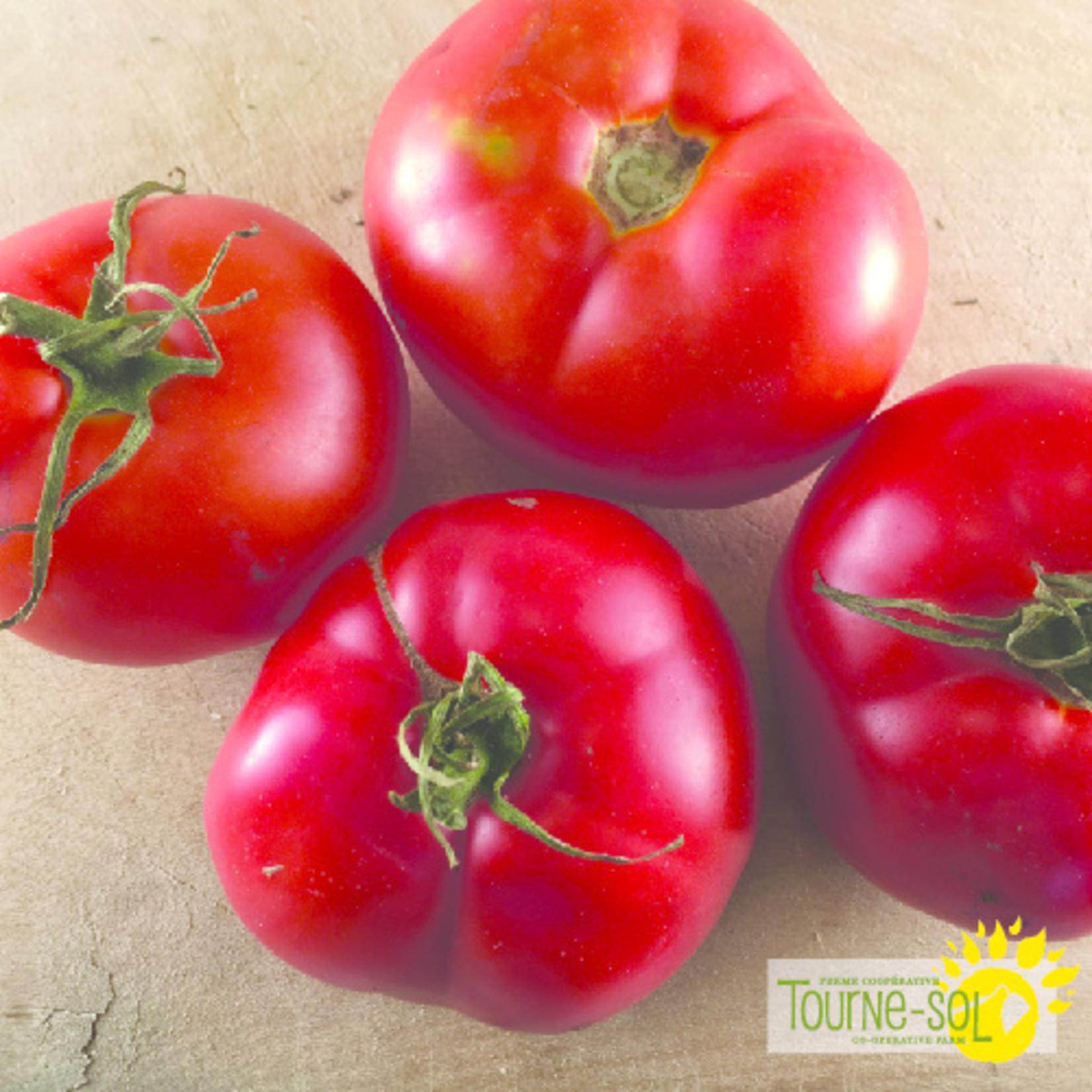 Tourne-Sol Montreal Tasty red tomato