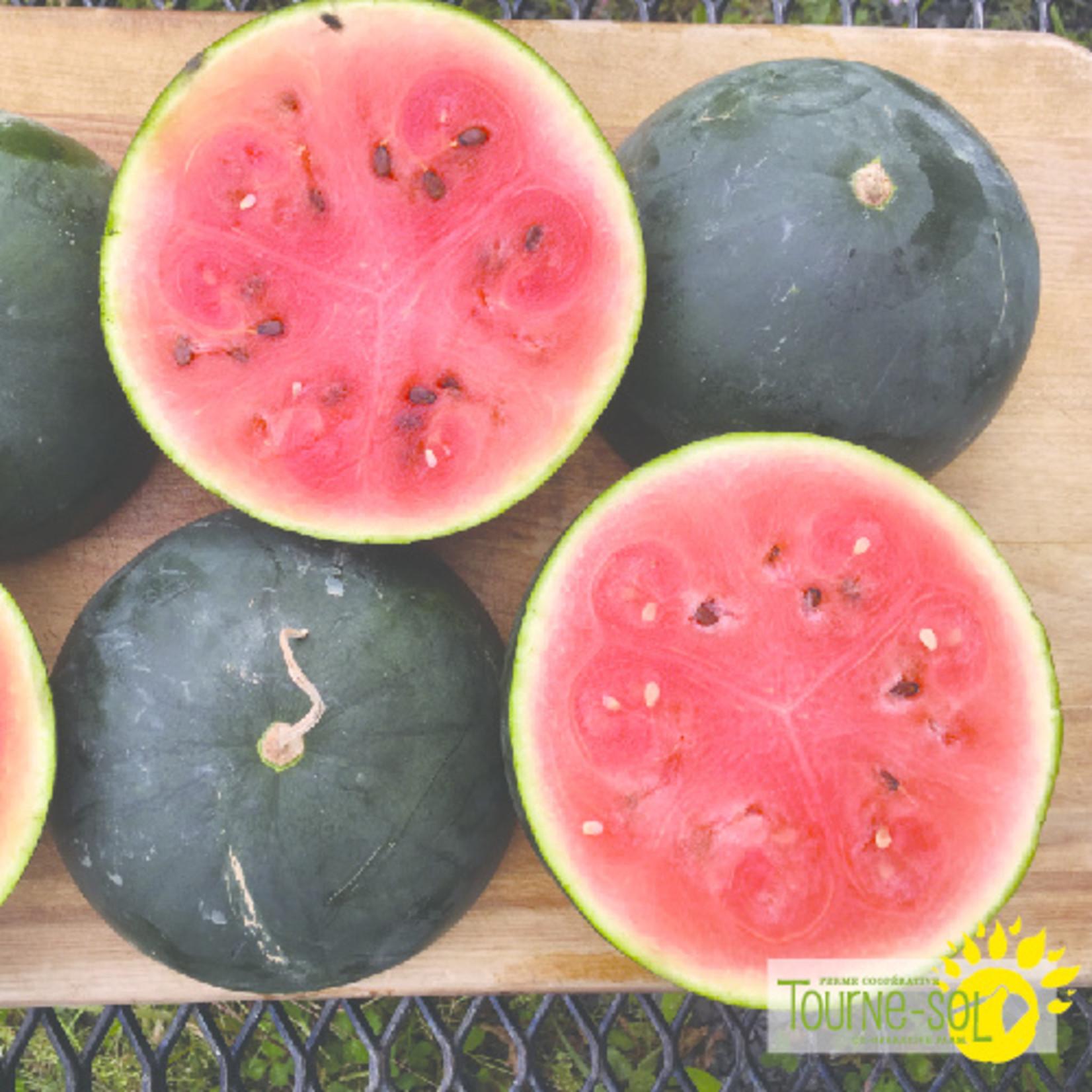 Tourne-Sol Blacktail Mountain watermelon