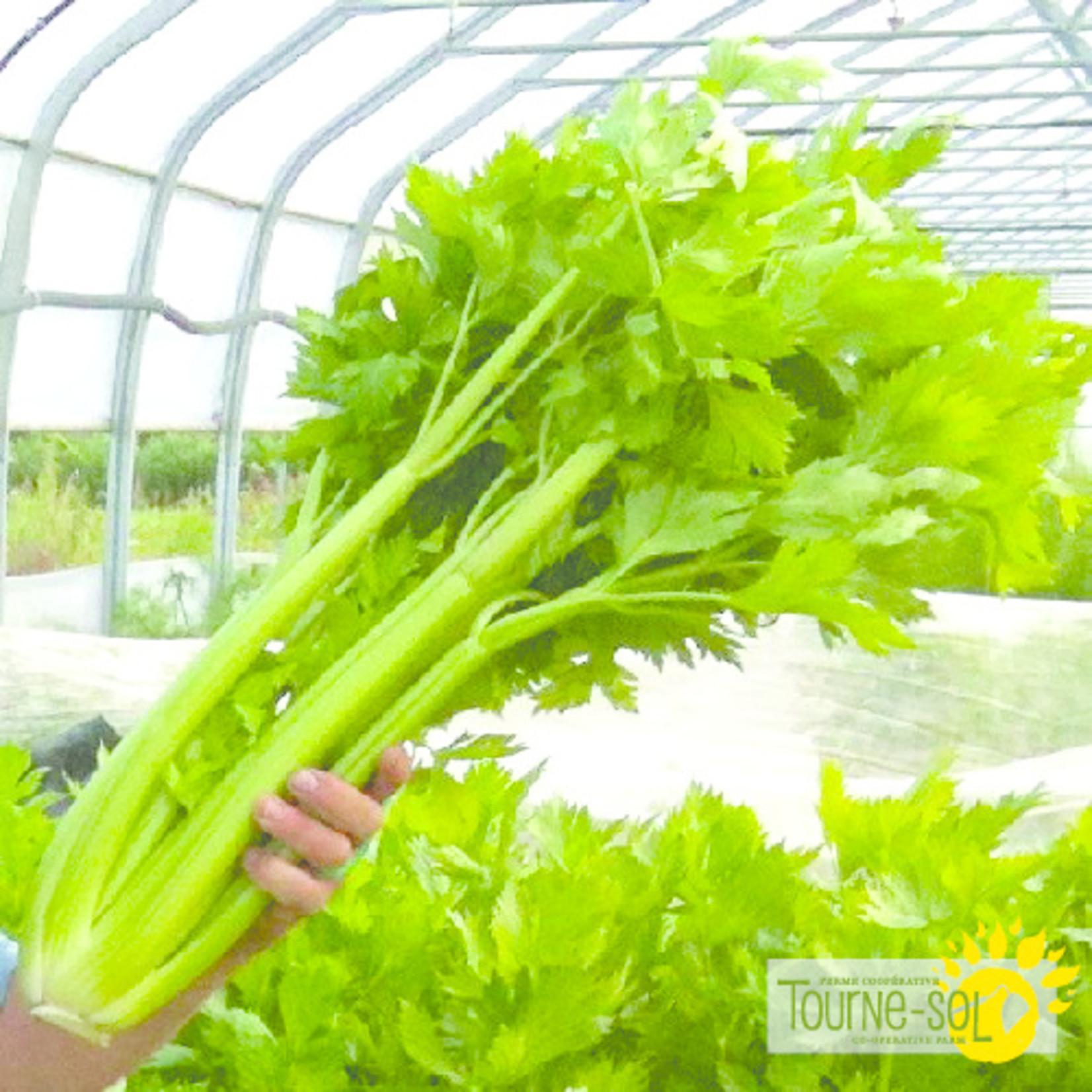 Tourne-Sol Tall Utah celery