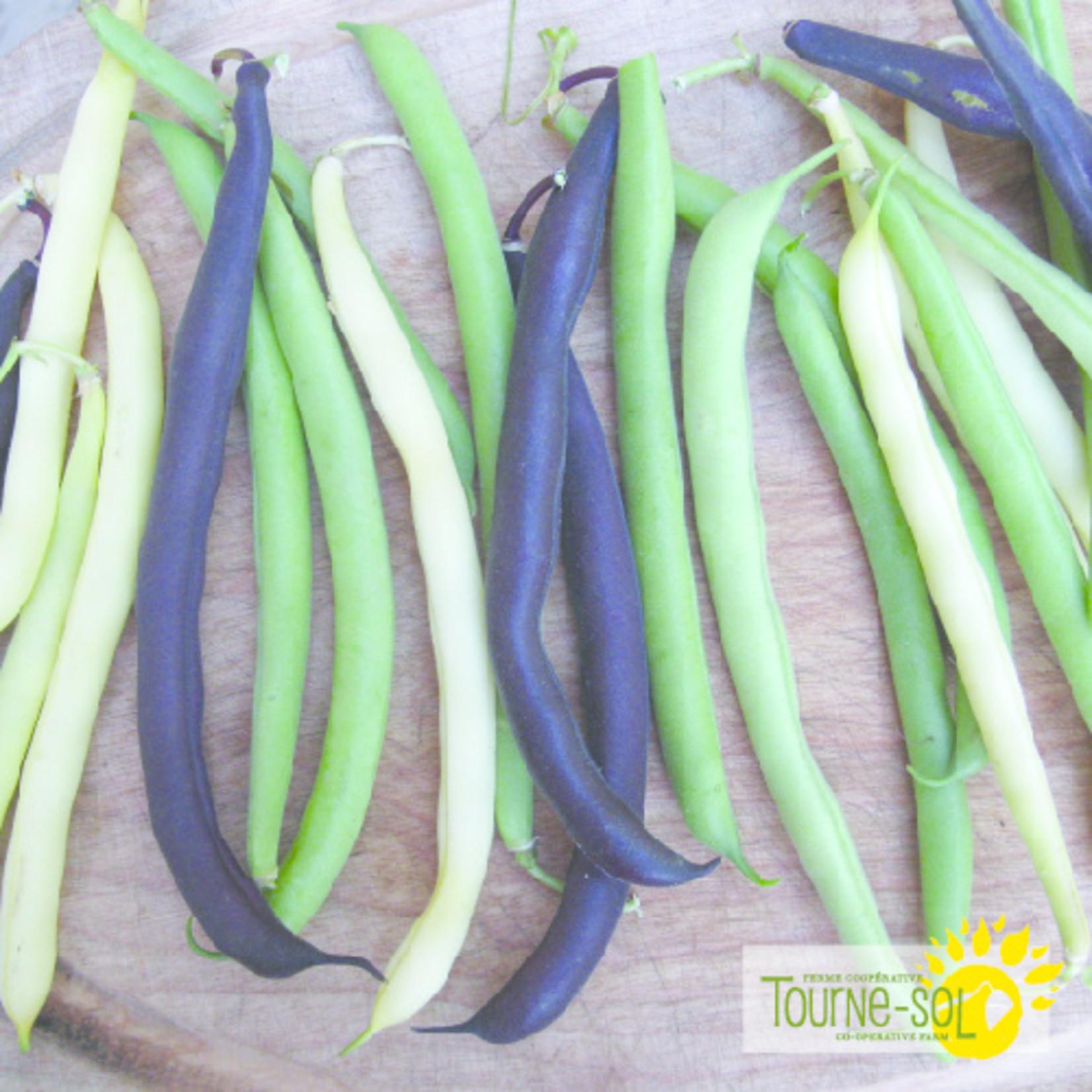 Tourne-Sol Snap bush bean mix