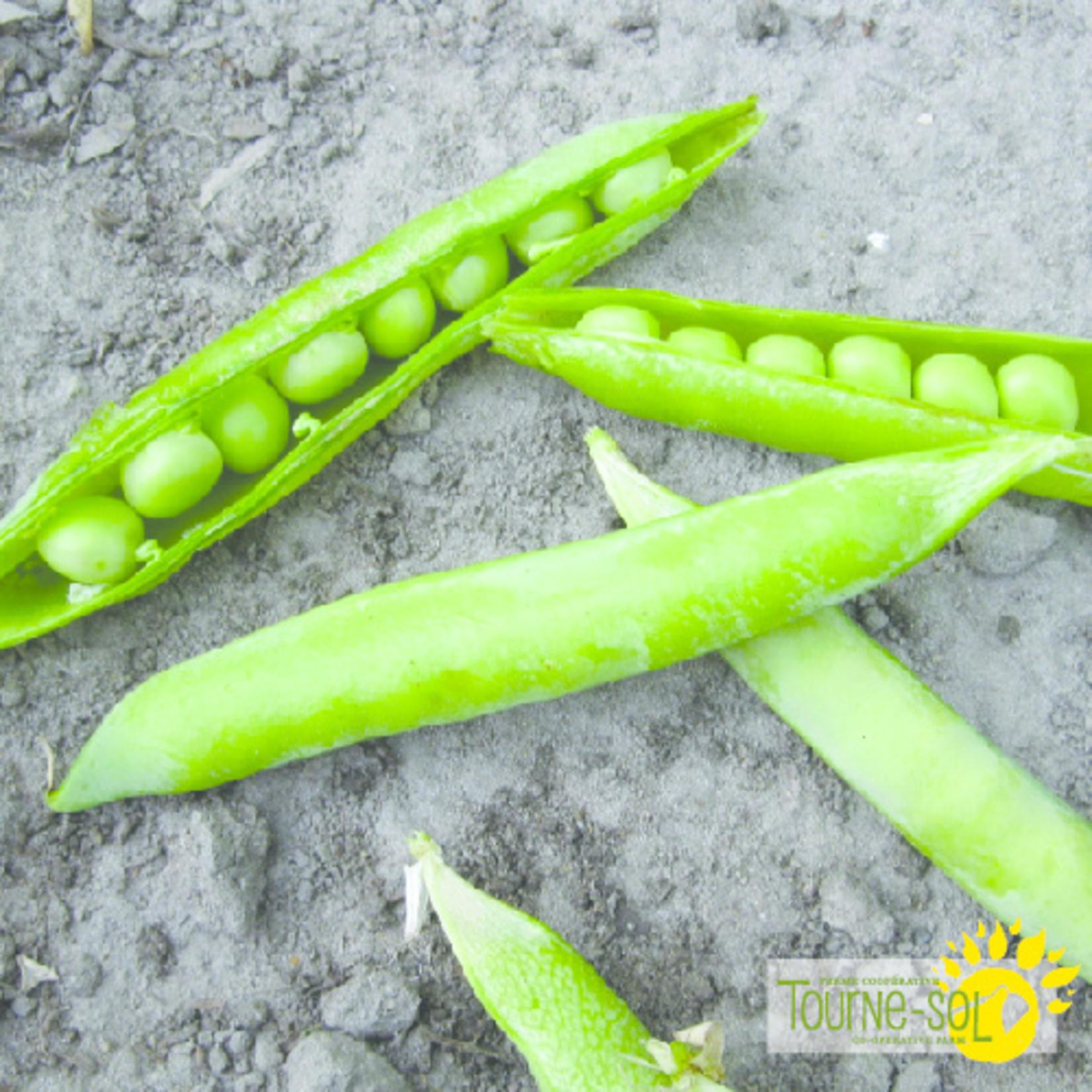 Tourne-Sol Green Arrow shelling pea